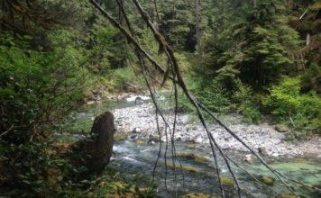 fly fishing terminology