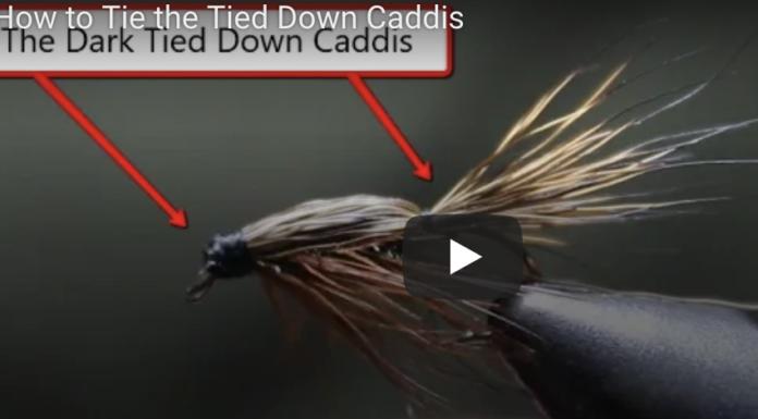 tied down caddis