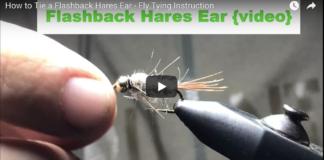 hares ear