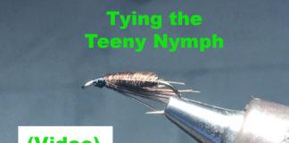 teeny nymph