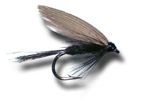 black gnat