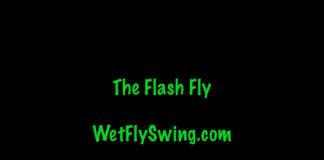 flash fly