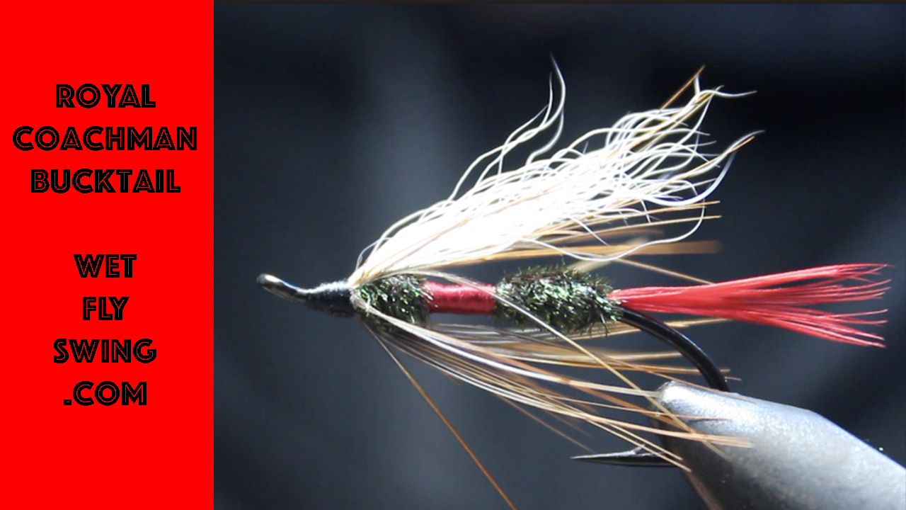 Royal Coachman: Adventures in the Fly Fishers World