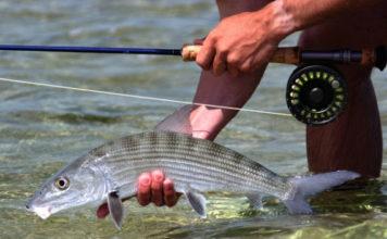 La Pescadora Fly Fishing