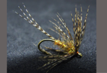 steve bird soft hackle journal