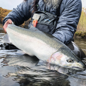 trout spey